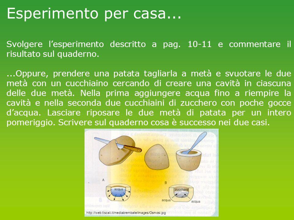 Esperimento per casa... Svolgere l'esperimento descritto a pag. 10-11 e commentare il risultato sul quaderno.