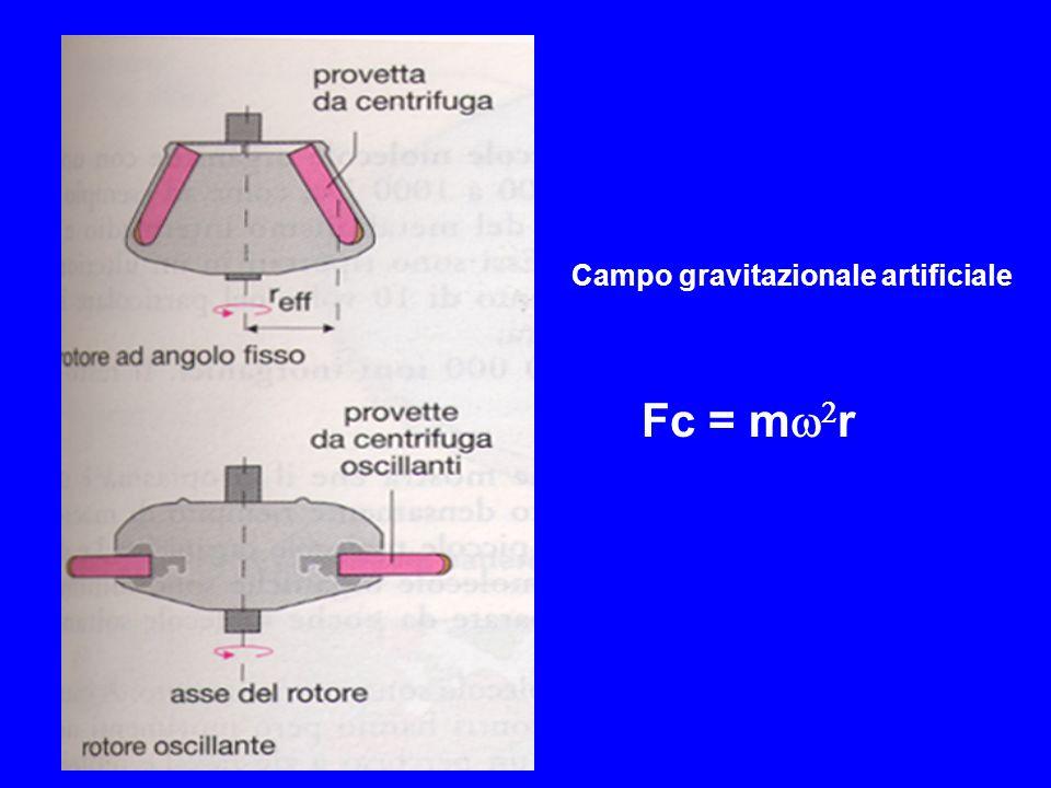 Campo gravitazionale artificiale