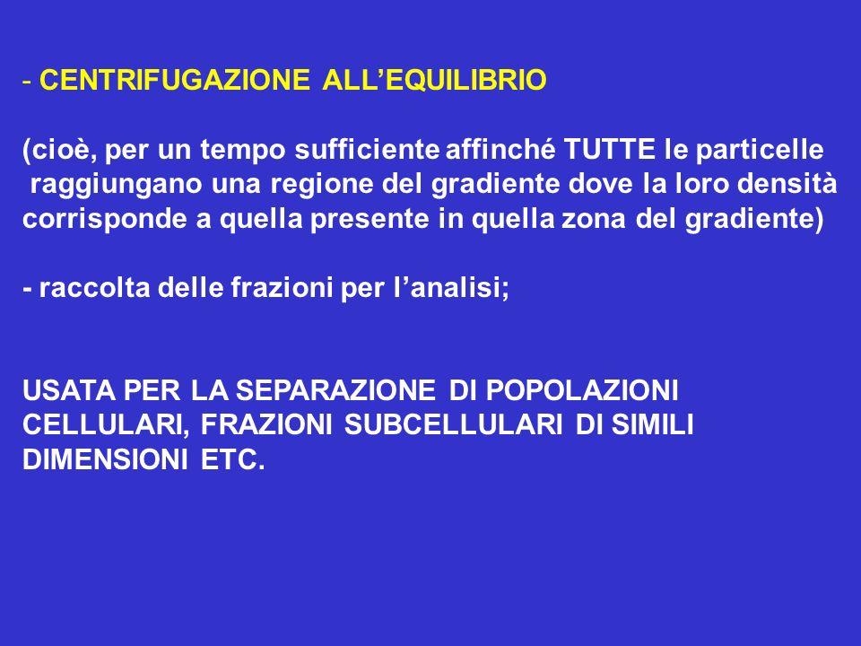 - CENTRIFUGAZIONE ALL'EQUILIBRIO