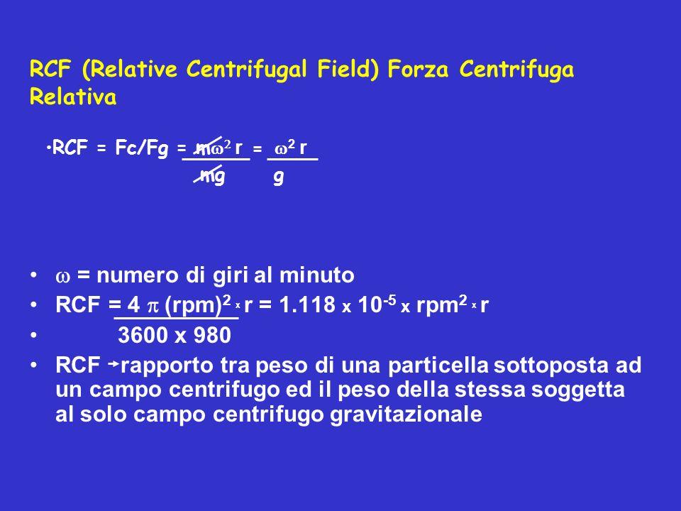 RCF (Relative Centrifugal Field) Forza Centrifuga Relativa