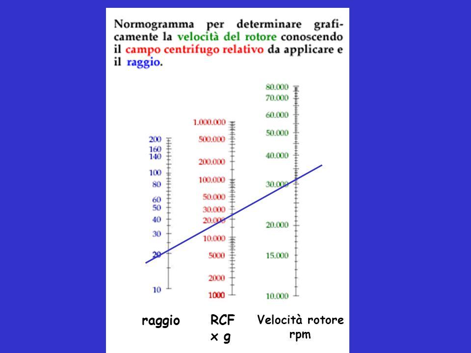 raggio RCF x g Velocità rotore rpm