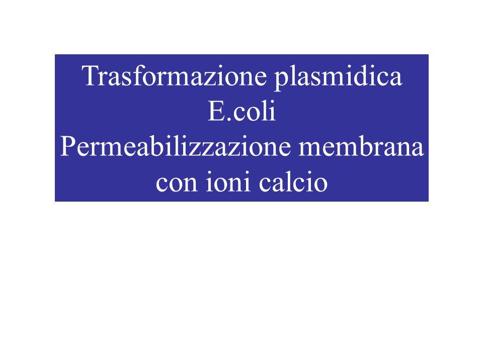 Trasformazione plasmidica E.coli Permeabilizzazione membrana
