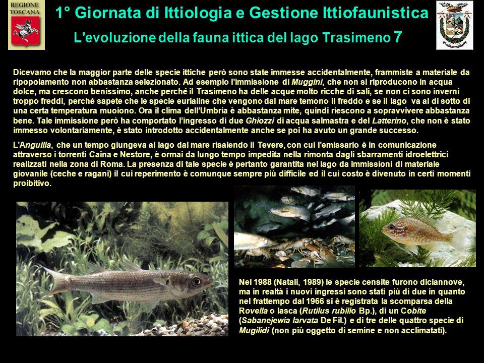 L evoluzione della fauna ittica del lago Trasimeno 7