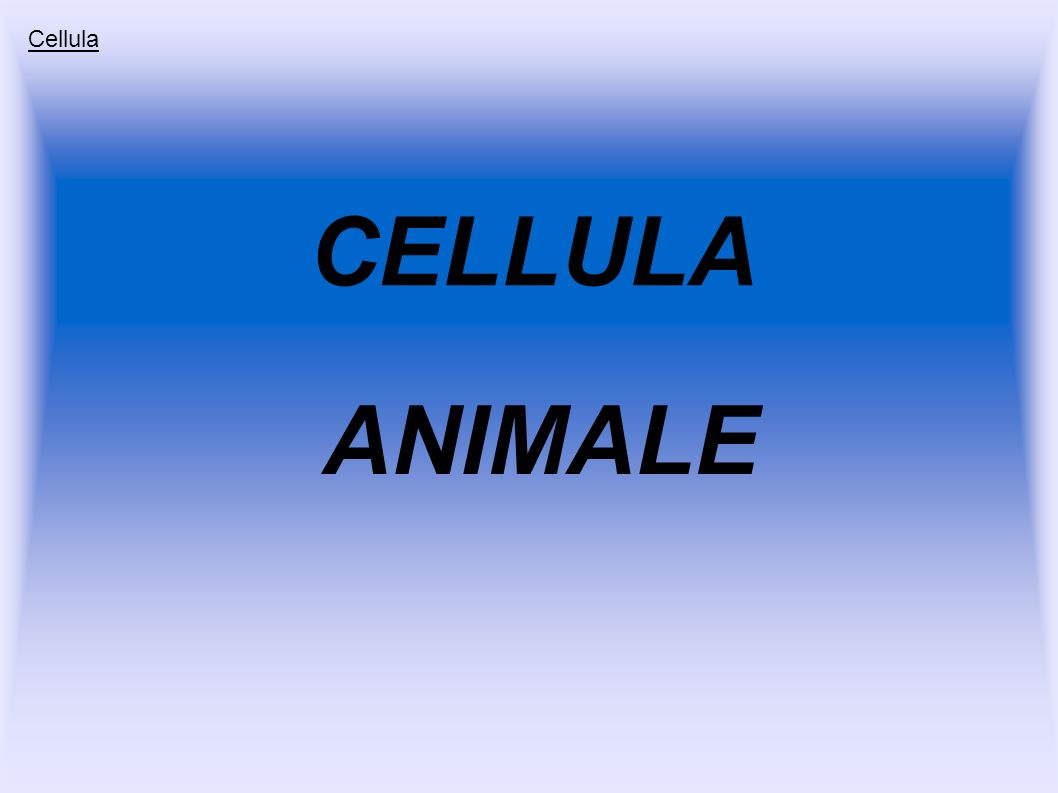 Cellula CELLULA ANIMALE
