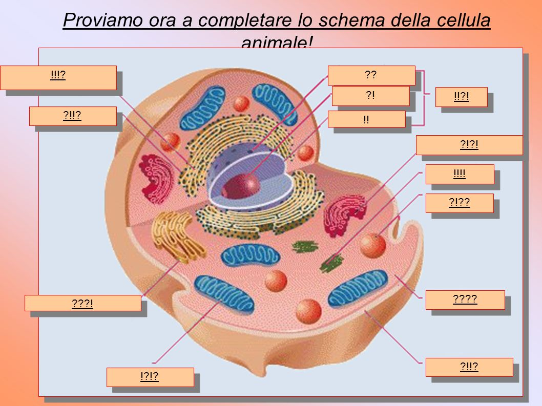 Proviamo ora a completare lo schema della cellula animale!