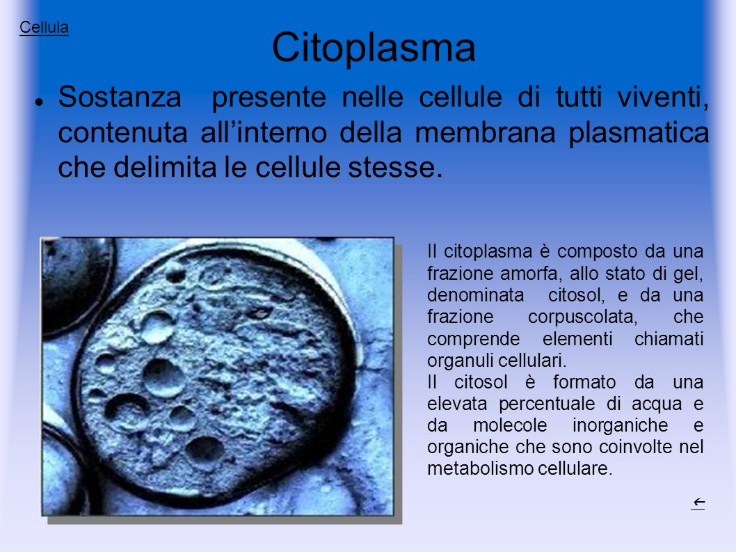 Citoplasma Cellula.