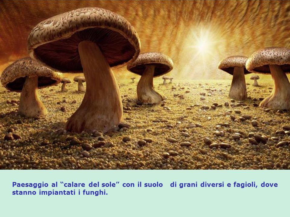 Paesaggio al calare del sole con il suolo di grani diversi e fagioli, dove stanno impiantati i funghi.