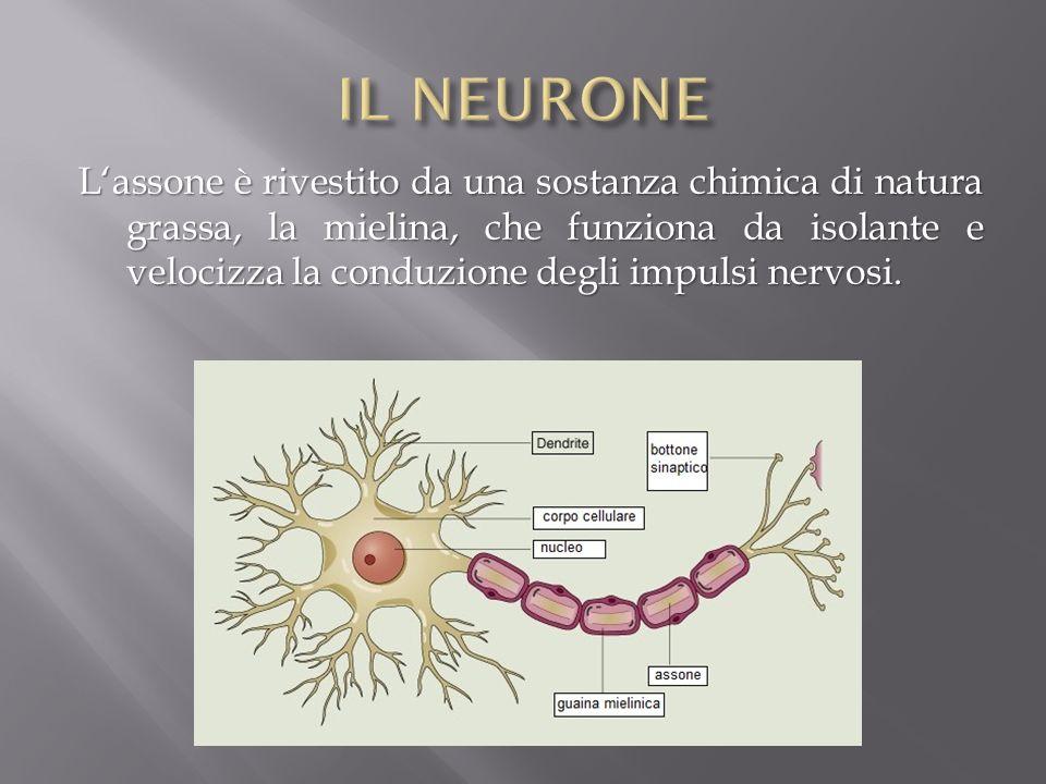 IL NEURONE
