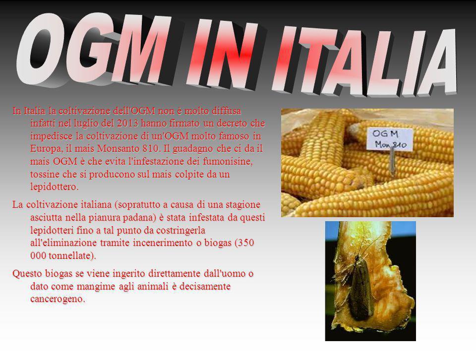 OGM IN ITALIA