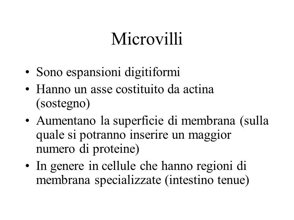 Microvilli Sono espansioni digitiformi