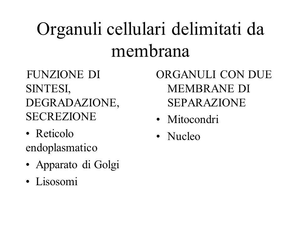 Organuli cellulari delimitati da membrana