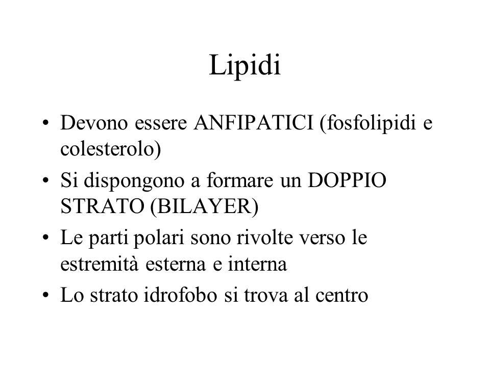 Lipidi Devono essere ANFIPATICI (fosfolipidi e colesterolo)