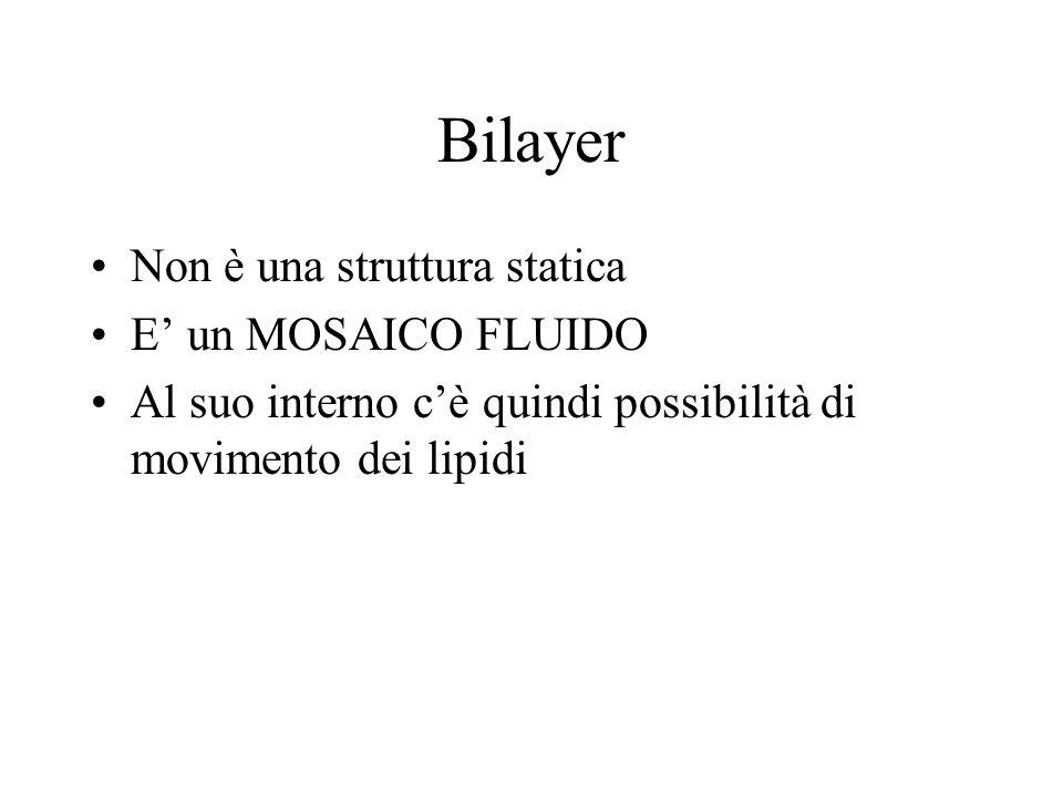 Bilayer Non è una struttura statica E' un MOSAICO FLUIDO