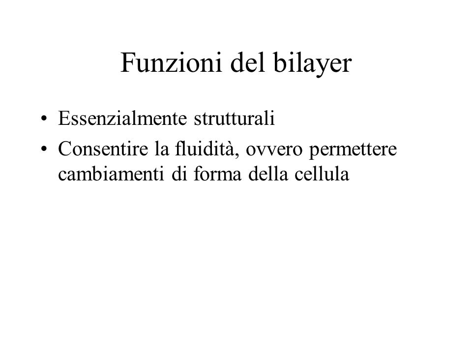 Funzioni del bilayer Essenzialmente strutturali