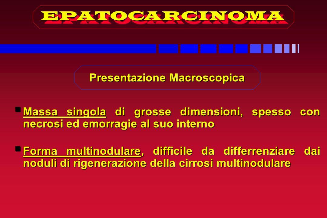 Presentazione Macroscopica