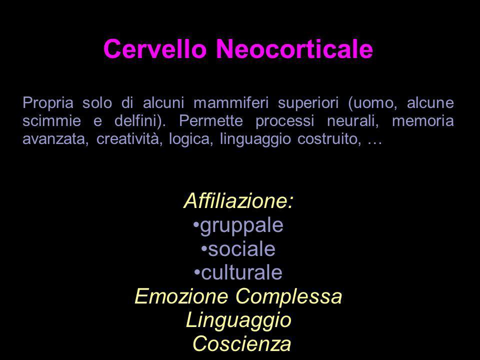 Cervello Neocorticale