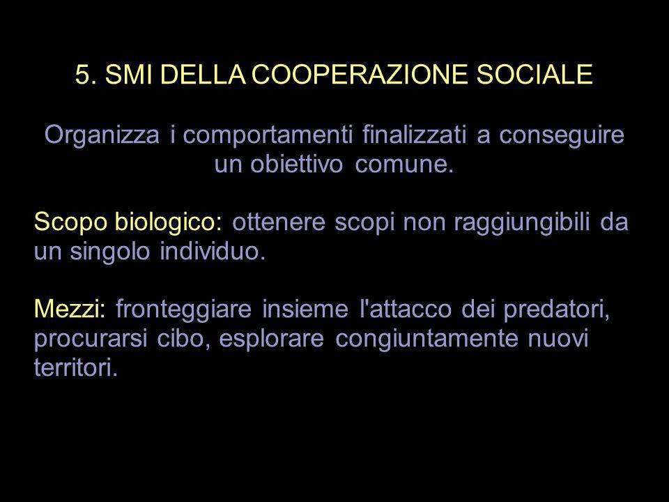 5. SMI DELLA COOPERAZIONE SOCIALE
