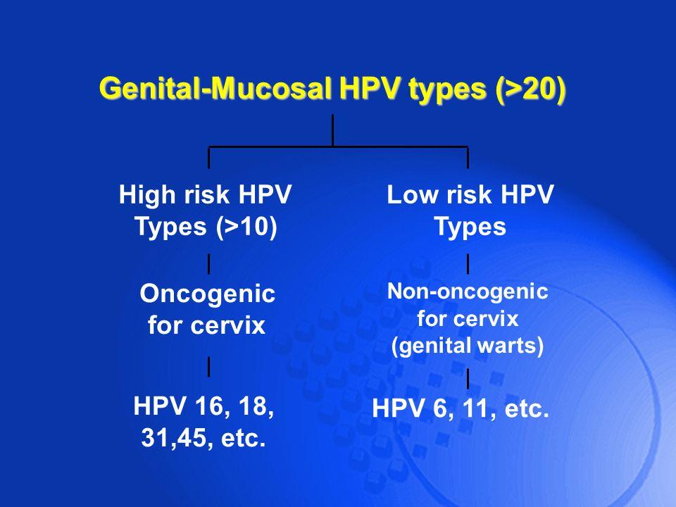Genital-Mucosal HPV types (>20)