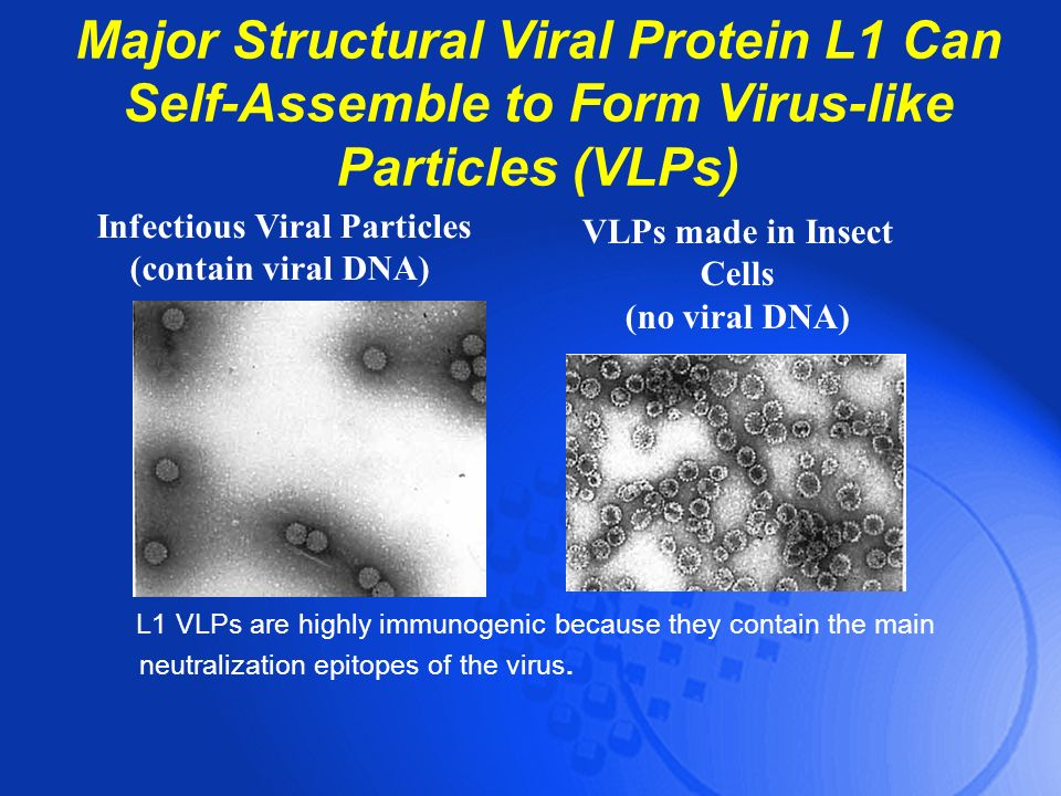 Infectious Viral Particles VLPs made in Insect Cells