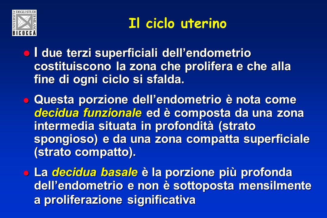 Il ciclo uterino I due terzi superficiali dell'endometrio costituiscono la zona che prolifera e che alla fine di ogni ciclo si sfalda.