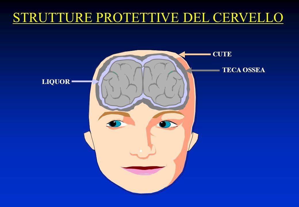STRUTTURE PROTETTIVE DEL CERVELLO