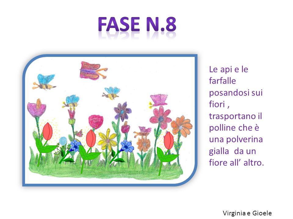 Fase n.8 Le api e le farfalle posandosi sui fiori , trasportano il polline che è una polverina gialla da un fiore all' altro.
