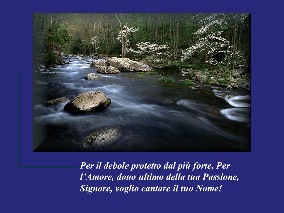 Per il debole protetto dal più forte, Per l'Amore, dono ultimo della tua Passione, Signore, voglio cantare il tuo Nome!
