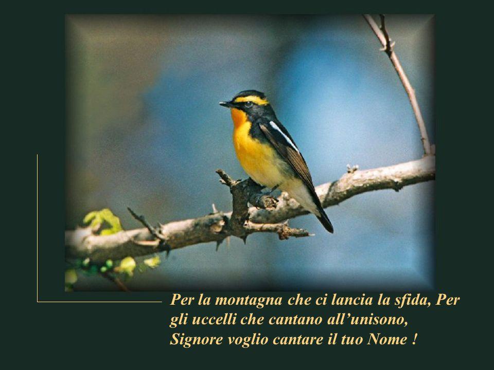 Per la montagna che ci lancia la sfida, Per gli uccelli che cantano all'unisono, Signore voglio cantare il tuo Nome !