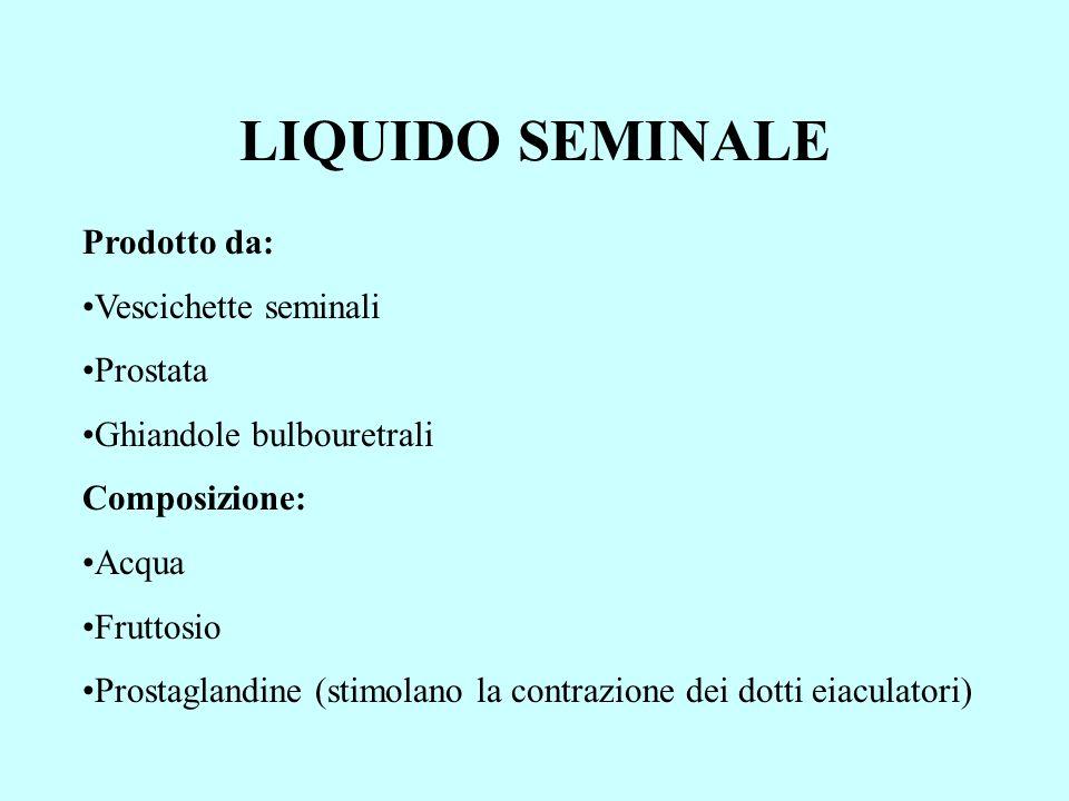 LIQUIDO SEMINALE Prodotto da: Vescichette seminali Prostata