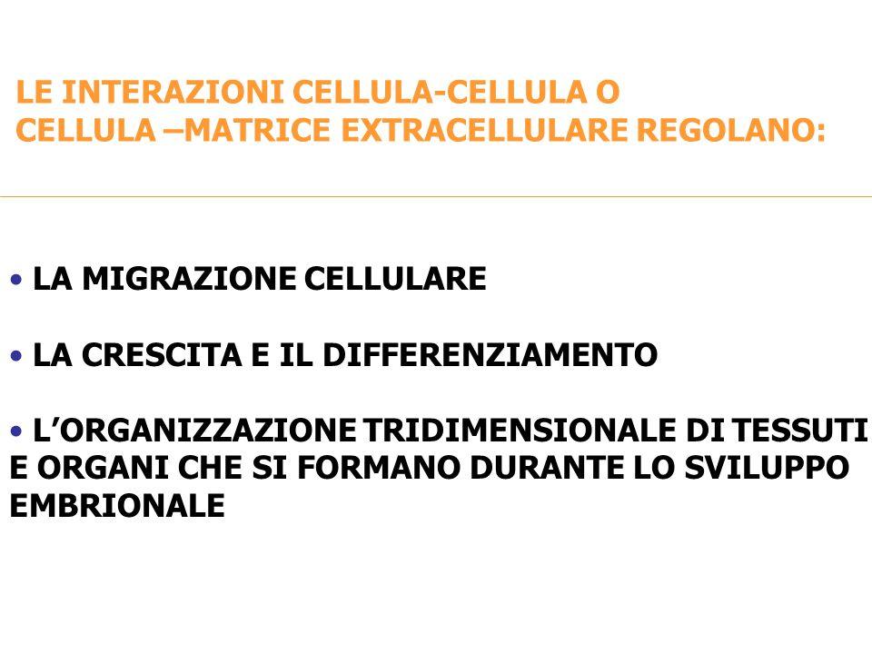 LE INTERAZIONI CELLULA-CELLULA O