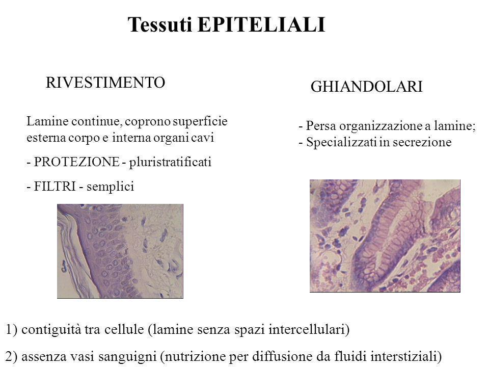 Tessuti EPITELIALI RIVESTIMENTO GHIANDOLARI