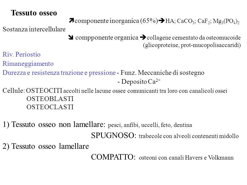 componente inorganica (65%)HA; CaCO3; CaF2; Mg3(PO4)2