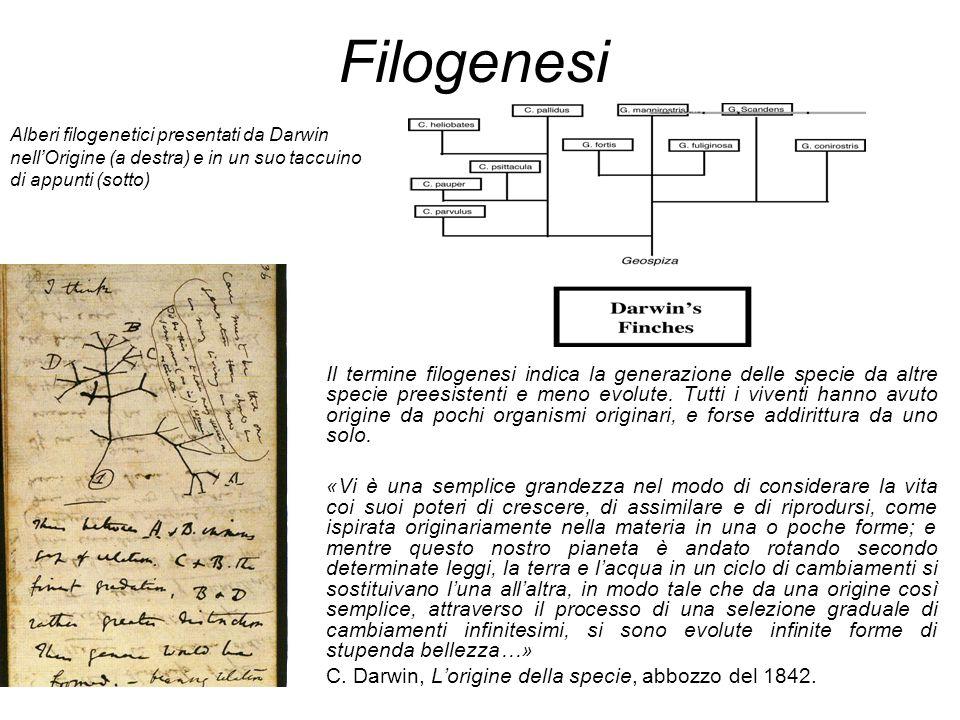 Filogenesi Alberi filogenetici presentati da Darwin nell'Origine (a destra) e in un suo taccuino di appunti (sotto)