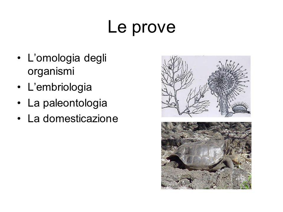 Le prove L'omologia degli organismi L'embriologia La paleontologia