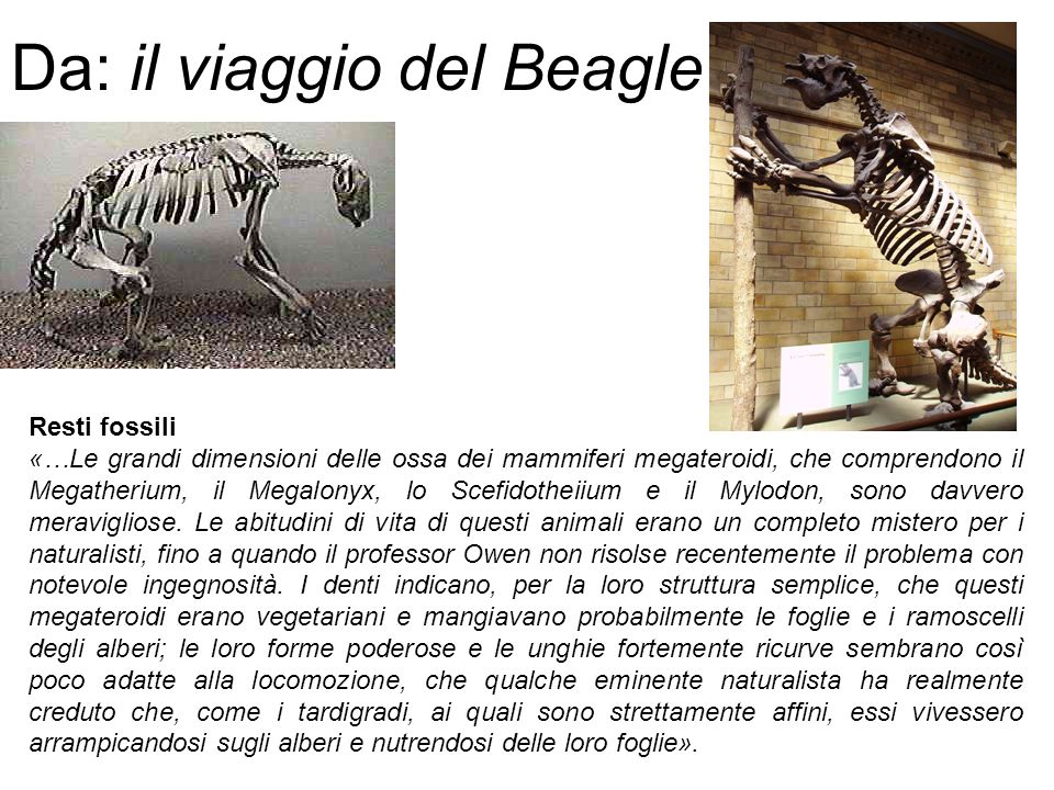 Da: il viaggio del Beagle
