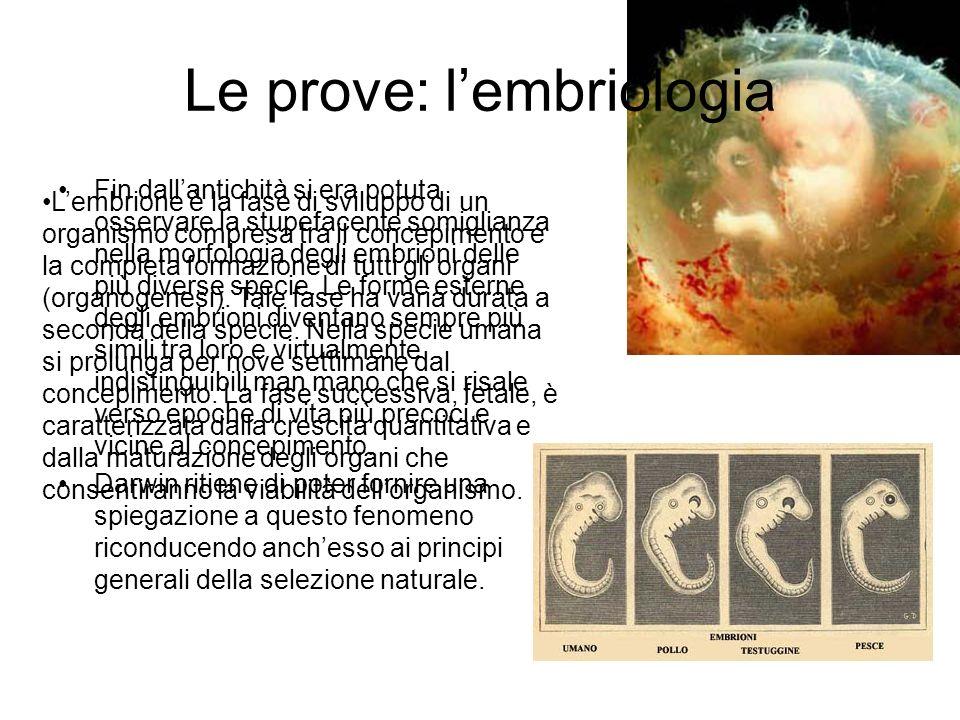 Le prove: l'embriologia