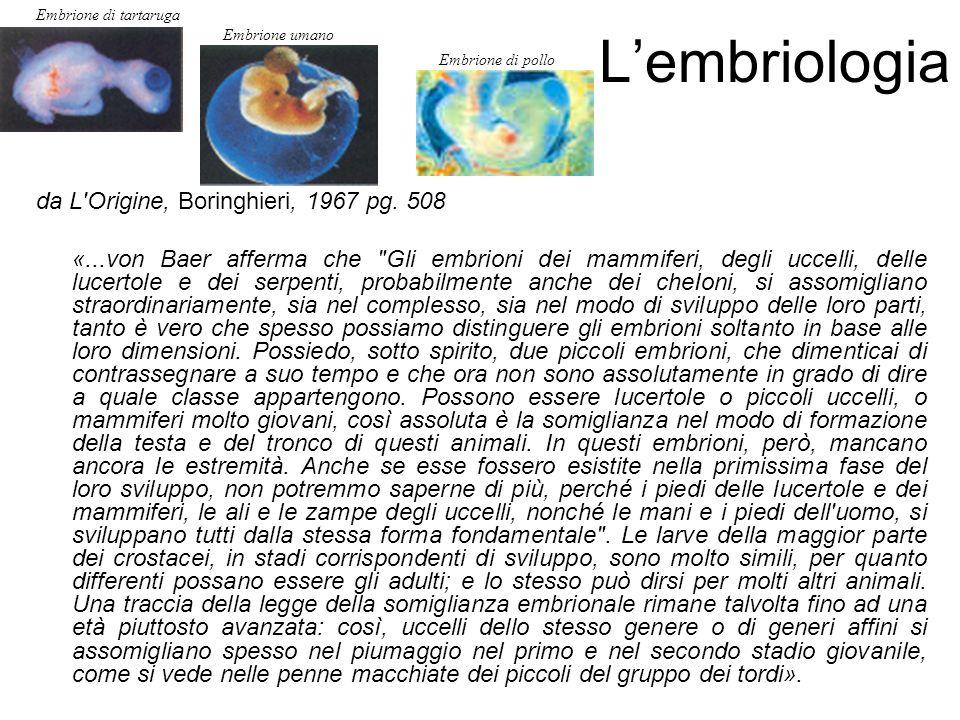 L'embriologia da L Origine, Boringhieri, 1967 pg. 508