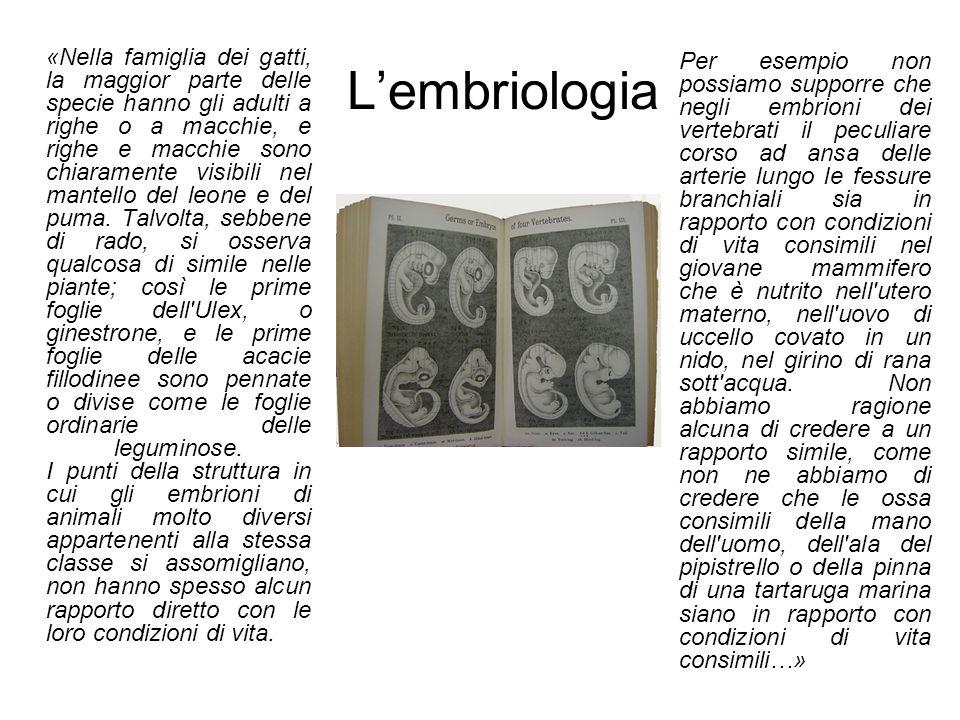 L'embriologia