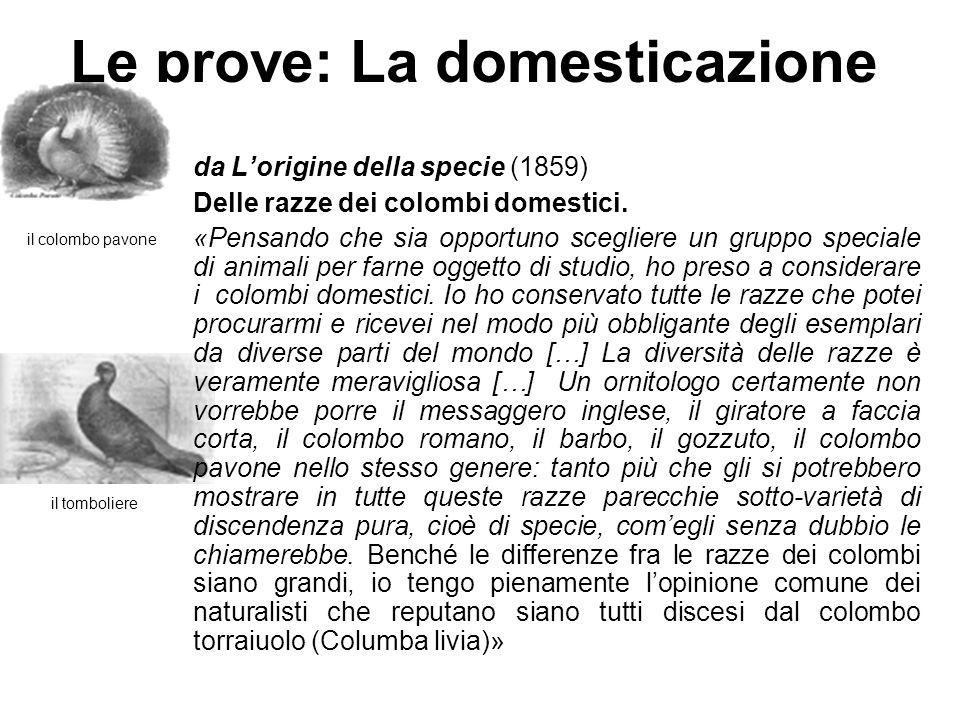 Le prove: La domesticazione