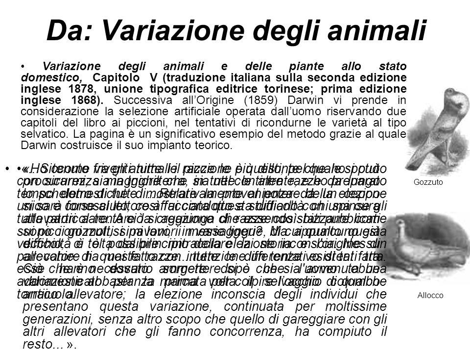 Da: Variazione degli animali