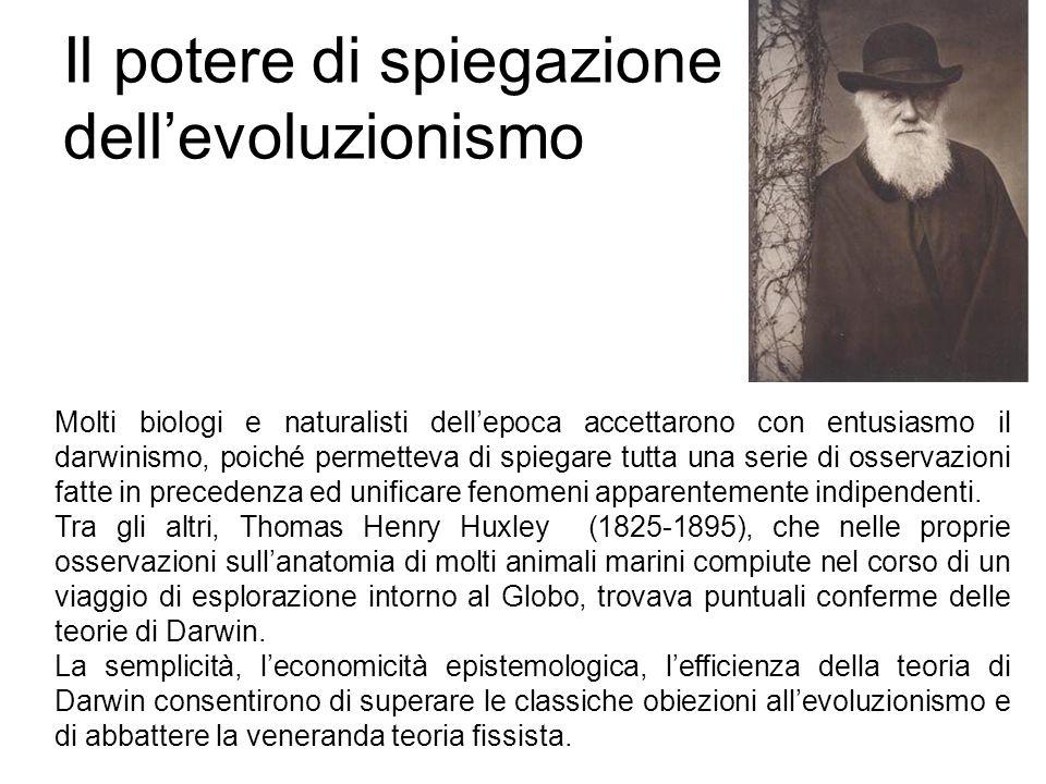 Il potere di spiegazione dell'evoluzionismo