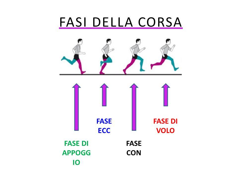 FASI DELLA CORSA GGG FASE ECC FASE DI VOLO FASE DI APPOGGIO FASE CON