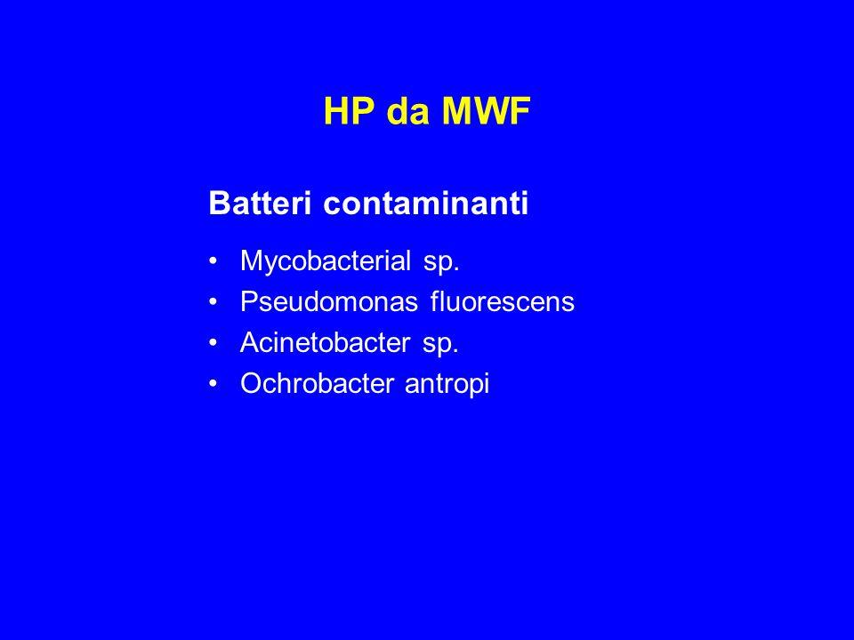 HP da MWF Batteri contaminanti Mycobacterial sp.