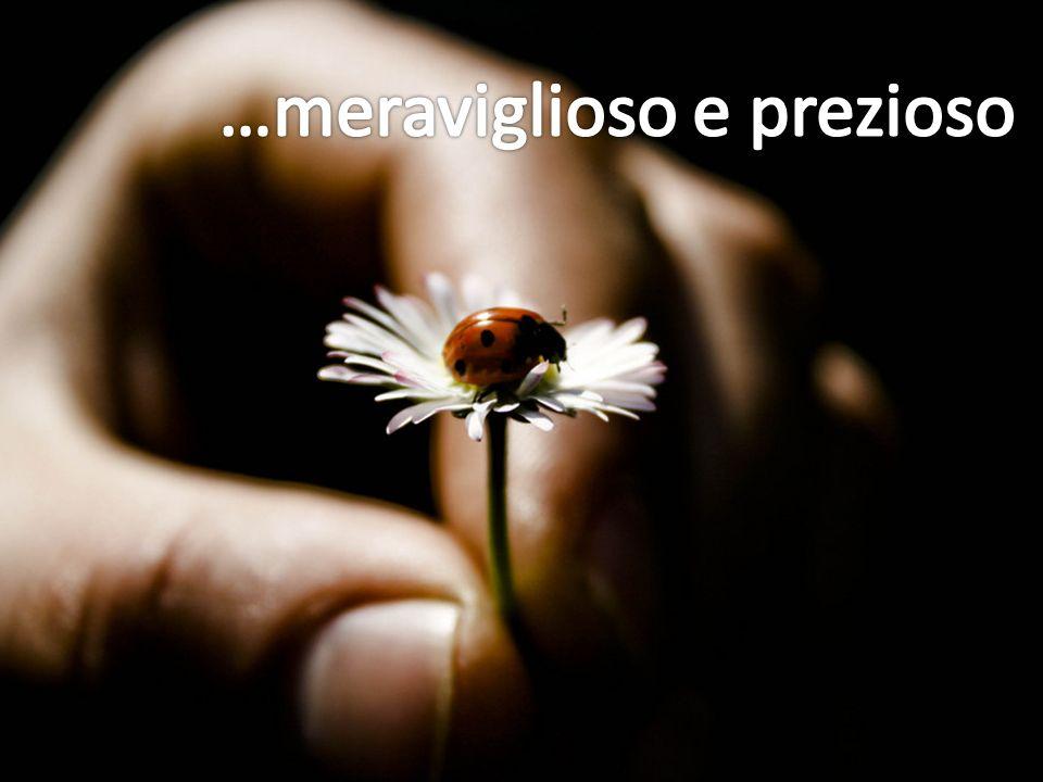 …meraviglioso e prezioso