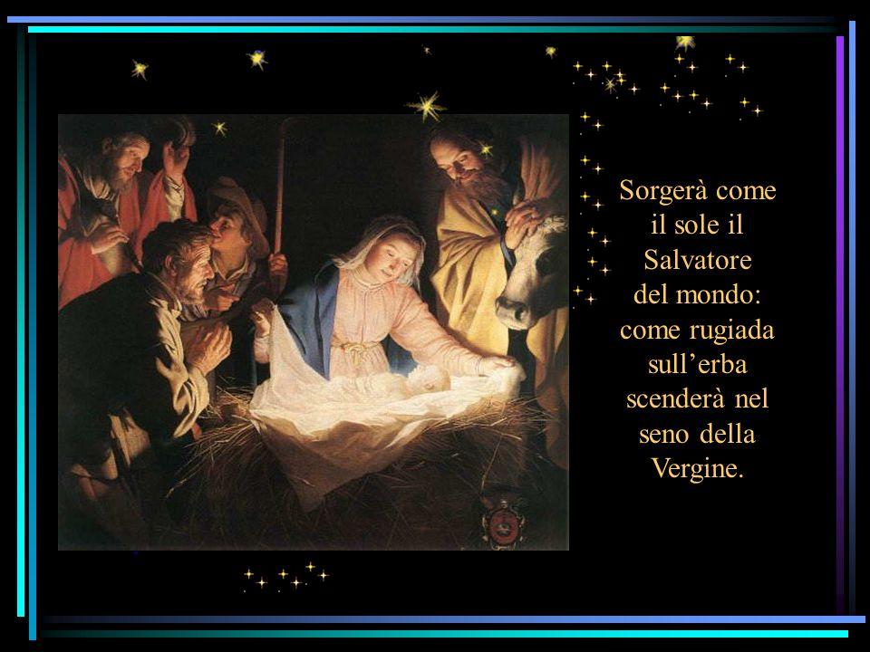 Sorgerà come il sole il Salvatore del mondo: come rugiada sull'erba scenderà nel seno della Vergine.
