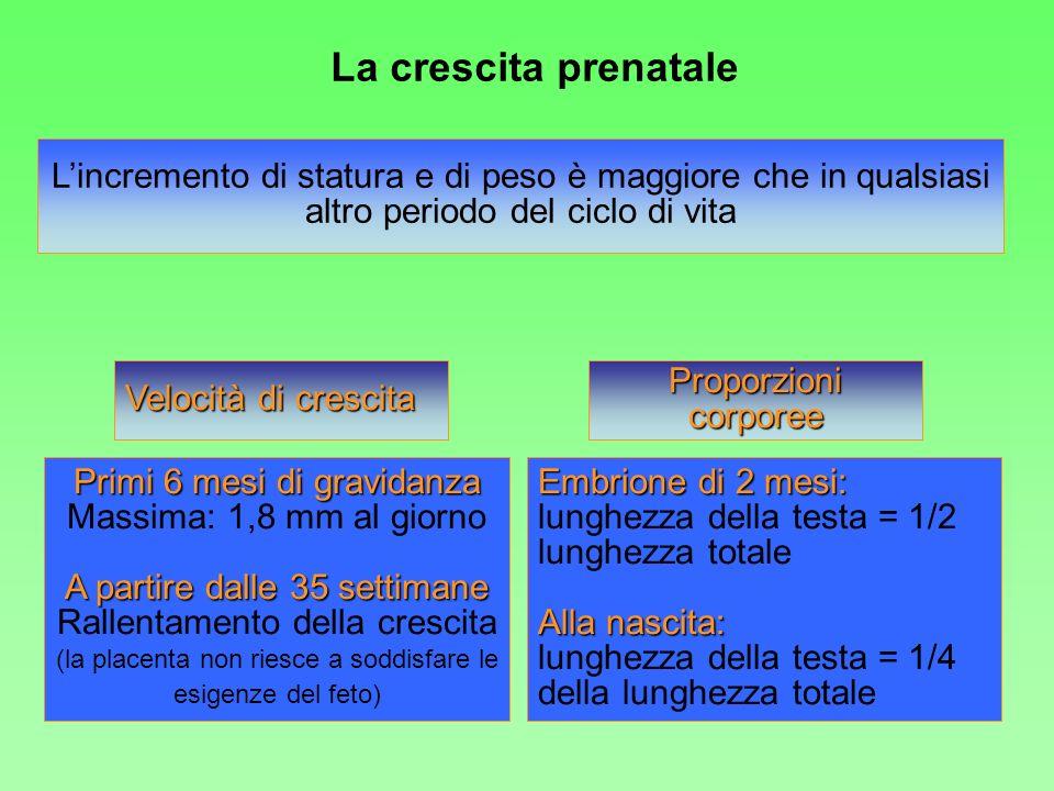 La crescita prenatale L'incremento di statura e di peso è maggiore che in qualsiasi altro periodo del ciclo di vita.