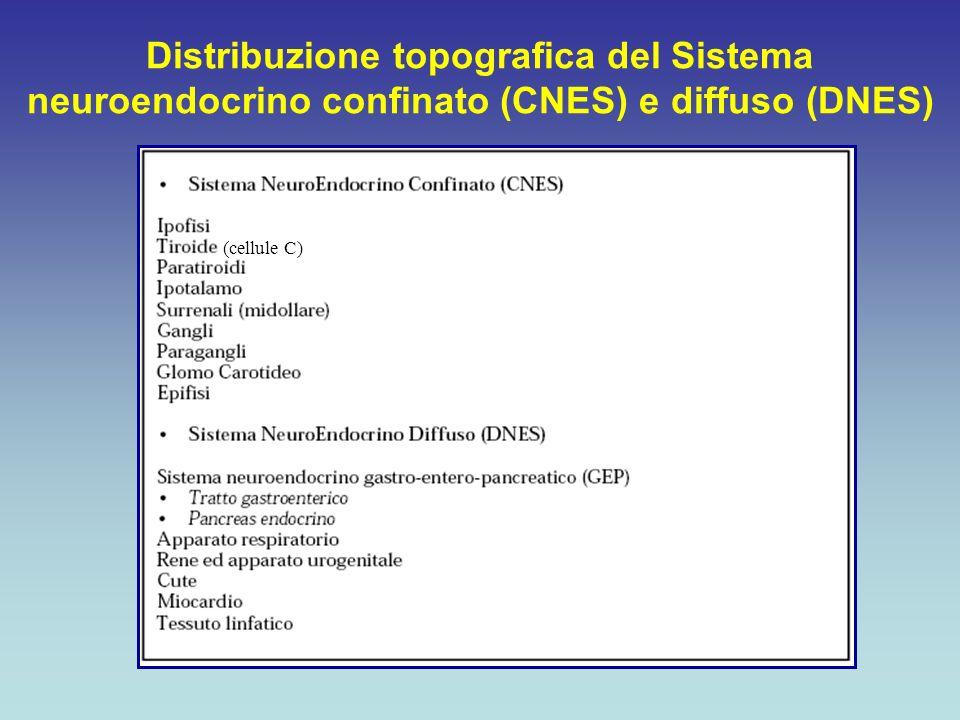 Distribuzione topografica del Sistema neuroendocrino confinato (CNES) e diffuso (DNES)