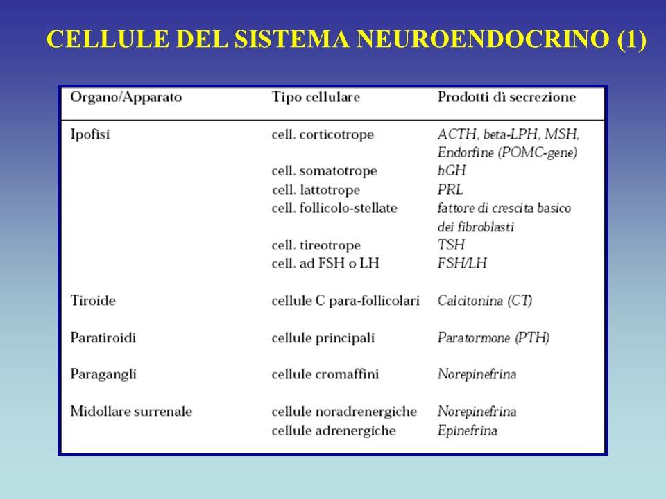 CELLULE DEL SISTEMA NEUROENDOCRINO (1)