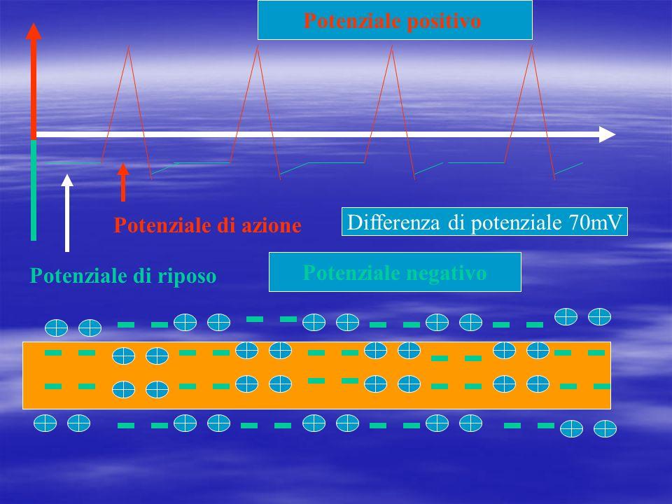 Differenza di potenziale 70mV