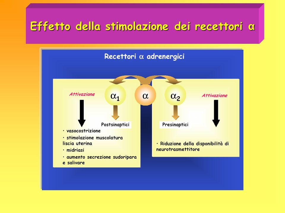 Effetto della stimolazione dei recettori α